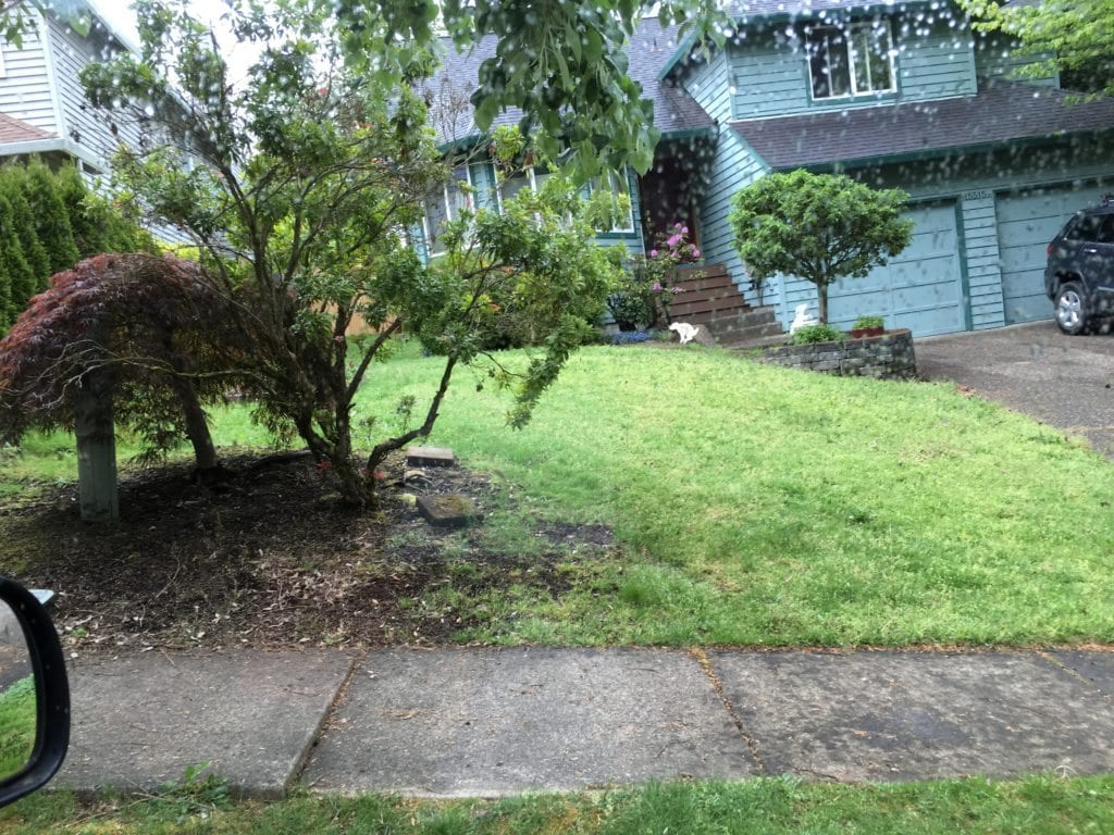 Front Yard Renovation - BEFORE